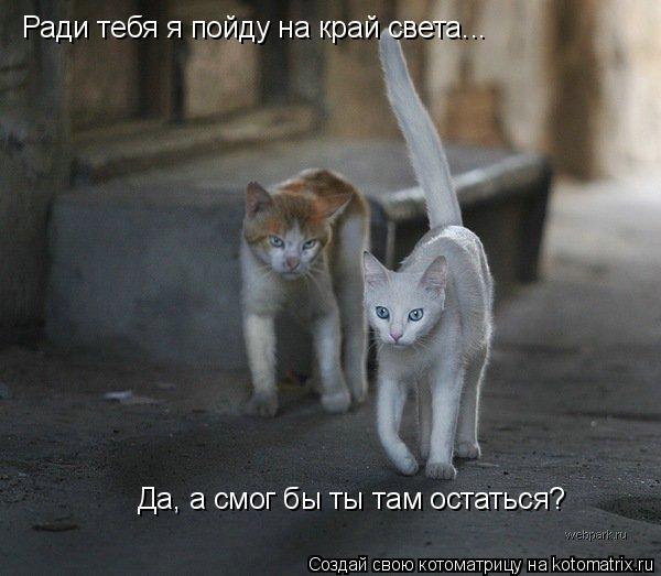 Котоматрица: Ради тебя я пойду на край света...  Да, а смог бы ты там остаться?