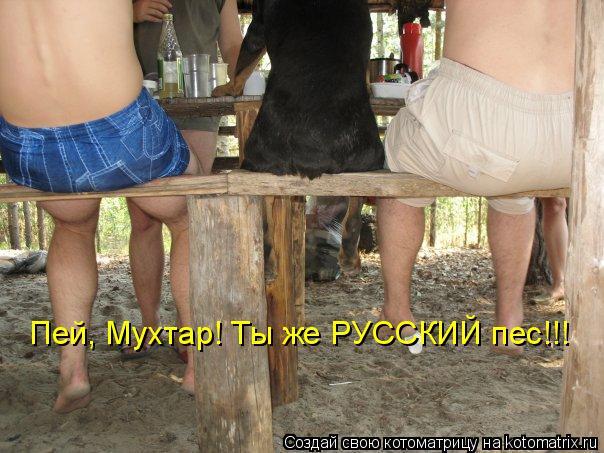 Котоматрица: Пей, Мухтар! Ты же РУССКИЙ пес!!!
