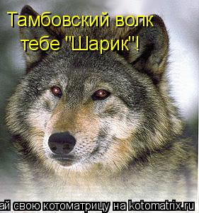 "Котоматрица: Тамбовский волк  тебе ""Шарик""!"
