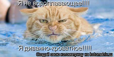 Котоматрица: Я не водоплавающее!!!! Я диванно-кроватное!!!!!