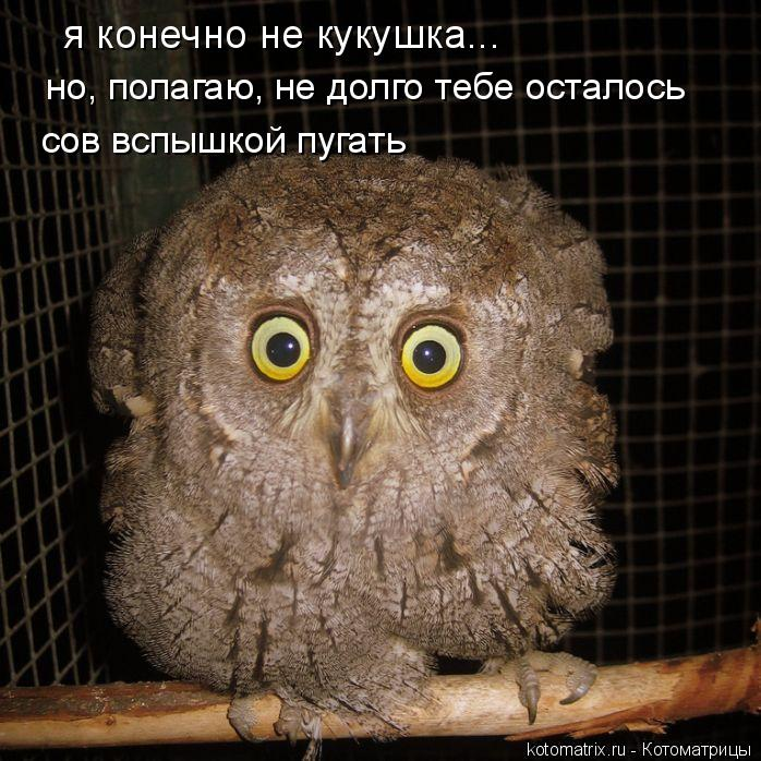 Котоматрица: я конечно не кукушка... но, полагаю, не долго тебе осталось  сов вспышкой пугать