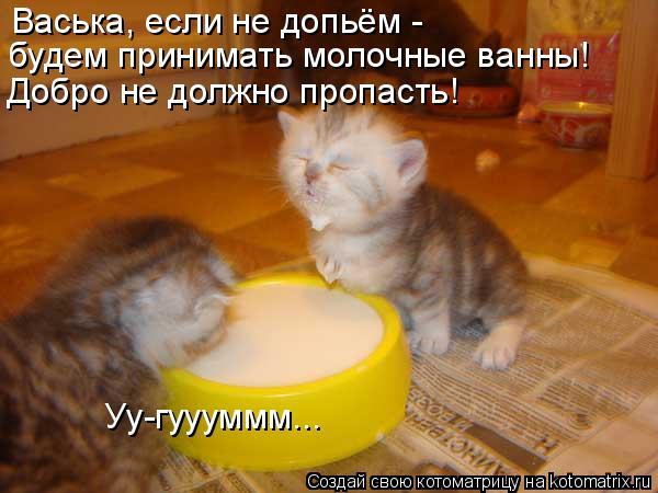 Котоматрица: Васька, если не допьём -  Добро не должно пропасть! будем принимать молочные ванны! Уу-гуууммм...