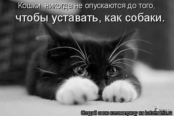 Котоматрица: Кошки  никогда не опускаются до того,   чтобы уставать, как собаки.