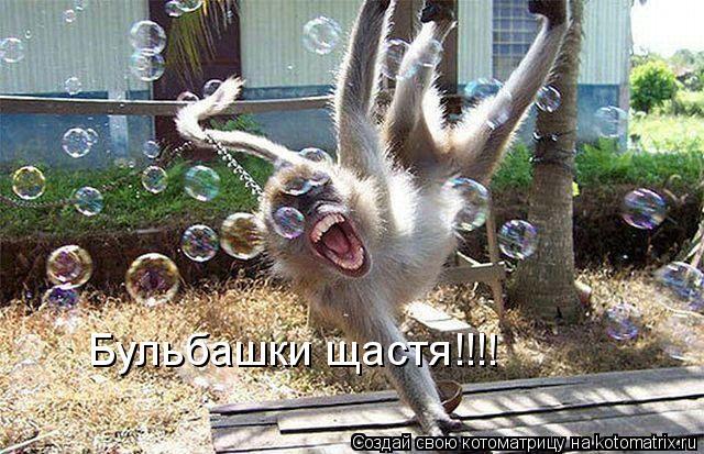 Котоматрица: Бульбашки щастя!!!!