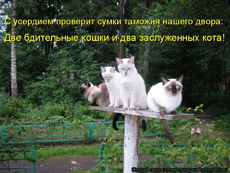 Котоматрица: С усердием проверит сумки таможня нашего двора: Две бдительные кошки и два заслуженных кота!