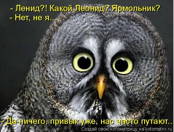 Котоматрица: - Ленид?! Какой Леонид? Ярмольник? - Нет, не я...  - Да ничего, привык уже, нас часто путают....