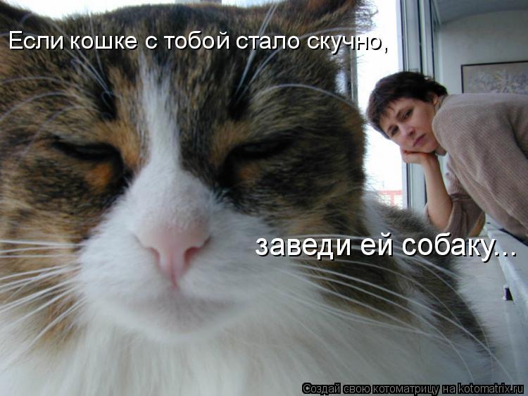 Котоматрица: Если кошке с тобой стало скучно,  заведи ей собаку...