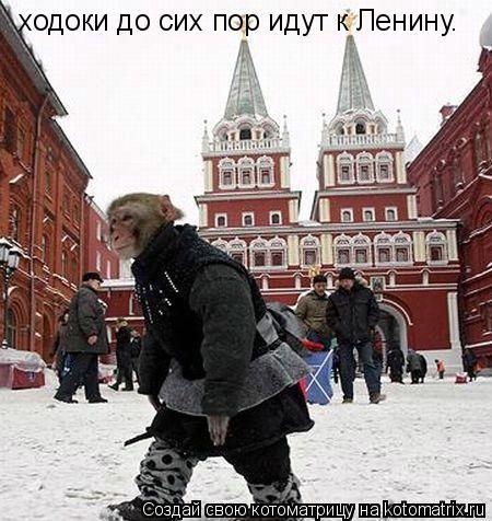 Котоматрица: ходоки до сих пор идут к Ленину.