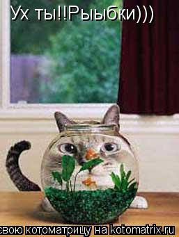 Котоматрица: Ух ты!!Рыыбки)))