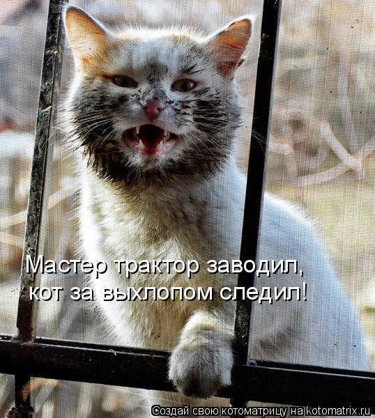 Котоматрица: кот за выхлопом следил! Мастер трактор заводил,