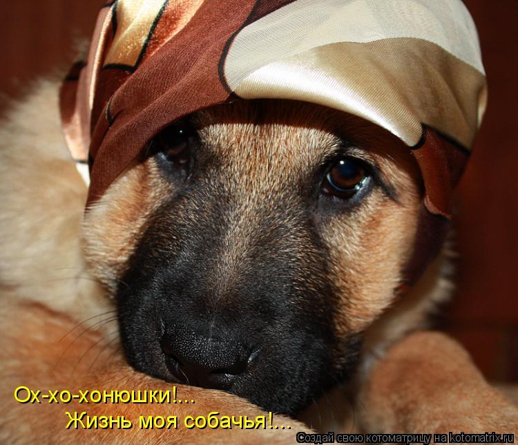 Котоматрица: Ох-хо-хонюшки!... Жизнь моя собачья!...