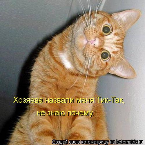 Котоматрица: Хозяева назвали меня Тик-Так, не знаю почему.