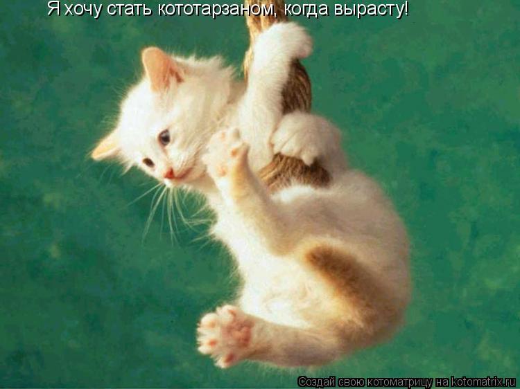 Котоматрица: Я хочу стать кототарзаном, когда вырасту!