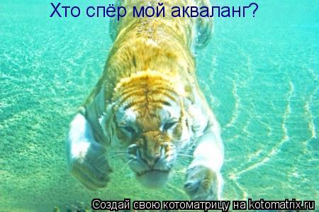 Котоматрица: Хто спёр мой акваланг?