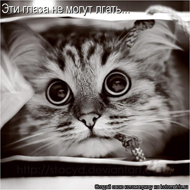 Котоматрица: Эти глаза не могут лгать...