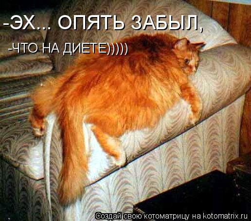 Котоматрица: -ЭХ... ОПЯТЬ ЗАБЫЛ, -ЧТО НА ДИЕТЕ)))))
