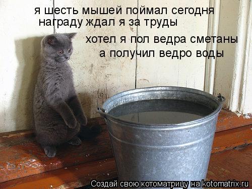 Котоматрица: я шесть мышей поймал сегодня награду ждал я за труды хотел я пол ведра сметаны а получил ведро воды