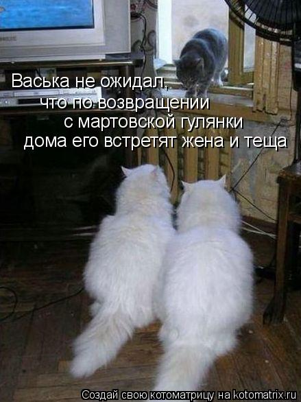 Котоматрица: Васька не ожидал,  что по возвращении  с мартовской гулянки дома его встретят жена и теща