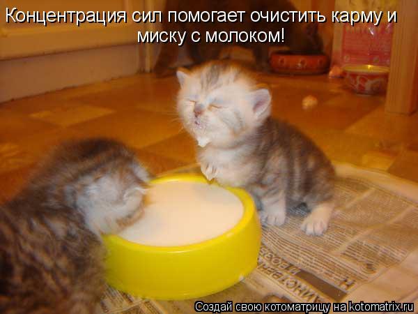 Котоматрица: Концентрация сил помогает очистить карму и  миску с молоком!