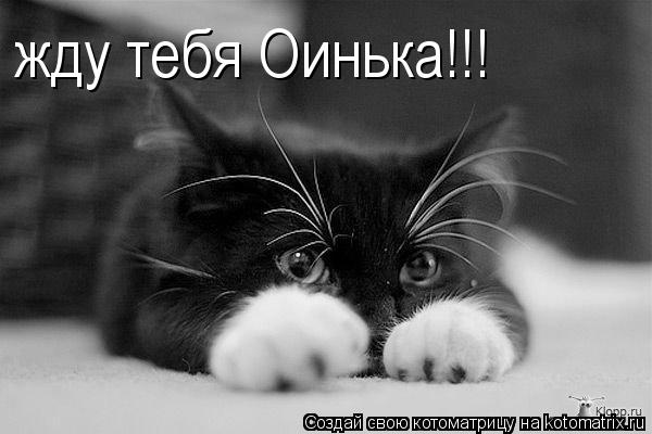 Котоматрица: жду тебя Оинька!!!
