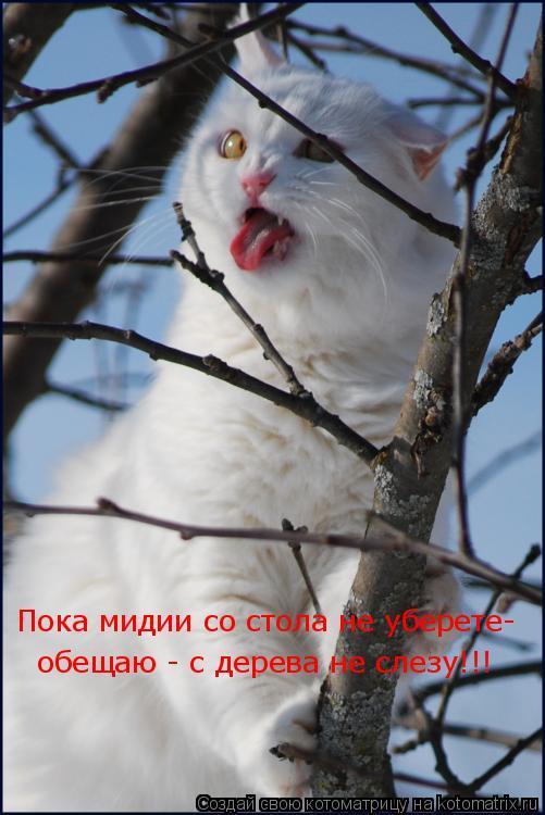 Котоматрица: Пока мидии со стола не уберете- обещаю - с дерева не слезу!!!