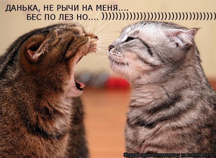Котоматрица: ДАНЬКА, НЕ РЫЧИ НА МЕНЯ.... БЕС ПО ЛЕЗ НО.... )))))))))))))))))))))))))))))))))))))))))))))))))))))))))))))))))))