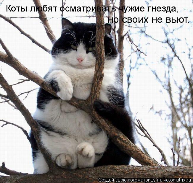 Котоматрица: Коты любят осматривать чужие гнезда,  Коты любят осматривать чужие гнезда,  Коты любят осматривать чужие гнезда,  но своих не вьют.