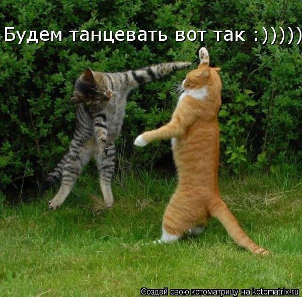 Котоматрица: Будем танцевать вот так :)))))