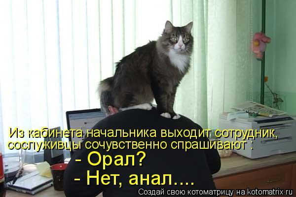 Котоматрица: Из кабинета начальника выходит сотрудник, сослуживцы сочувственно спрашивают : - Орал? - Нет, анал....