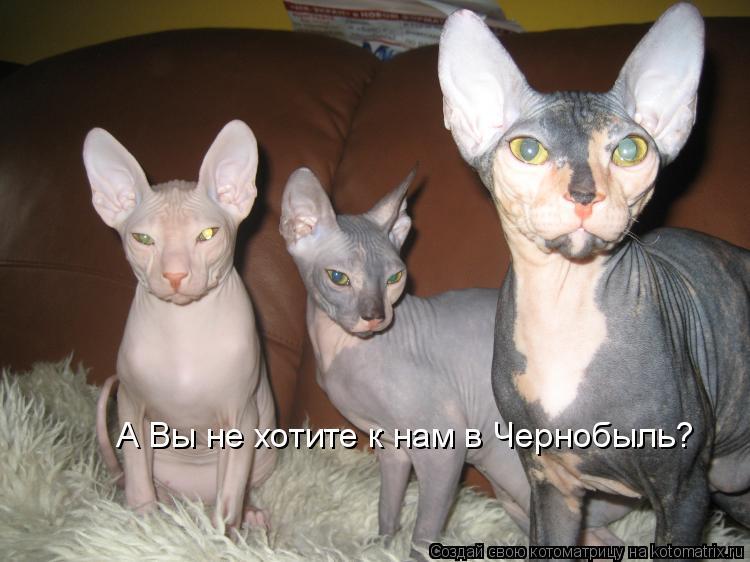 Котоматрица: А Вы не хотите к нам в Чернобыль?