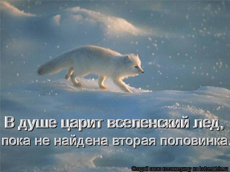 Котоматрица: В душе царит вселенский лед, В душе царит вселенский лед, пока не найдена вторая половинка... пока не найдена вторая половинка...