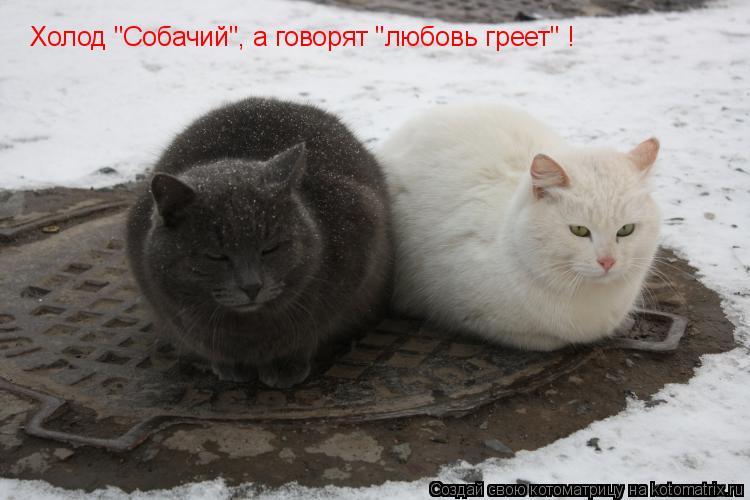 """Котоматрица: Холод """"Собачий"""", а говорят """"любовь греет"""" !"""
