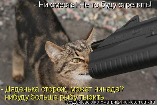 Котоматрица: - Ни сместа! Не то буду стрелять! - Дяденька сторож, может нинада?  нибуду больше рыбу тырить...