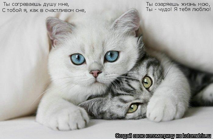 картинки чудо ты моё