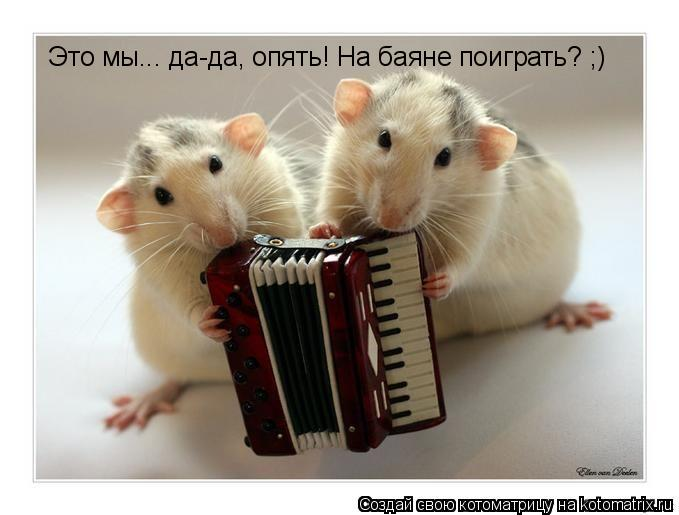 Котоматрица: Это мы... да-да, опять! На баяне поиграть? ;)