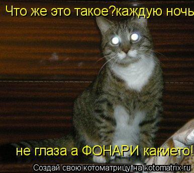 Котоматрица: Что же это такое?каждую ночь не глаза а ФОНАРИ какието!  не глаза а ФОНАРИ какието!  не глаза а ФОНАРИ какието!