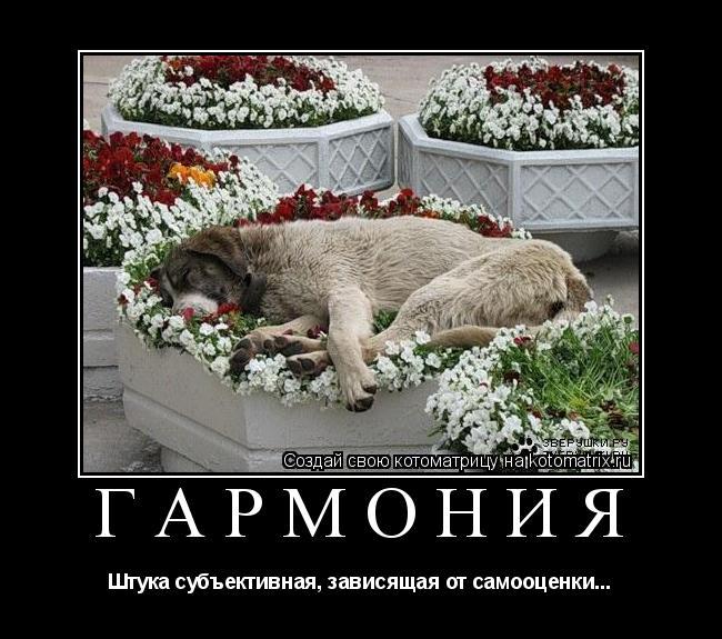 Котоматрица: гармония Штука субъективная, зависящая от самооценки...