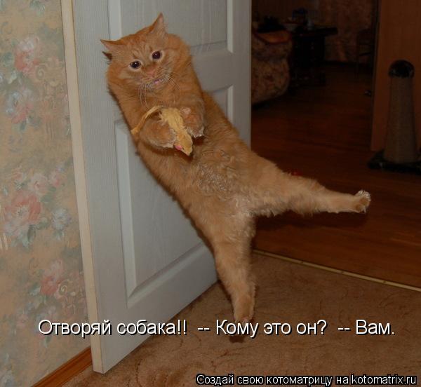 Котоматрица: Отворяй собака!!  -- Кому это он?  -- Вам.