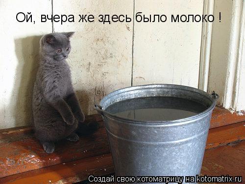 Котоматрица: Ой, вчера же здесь было молоко !