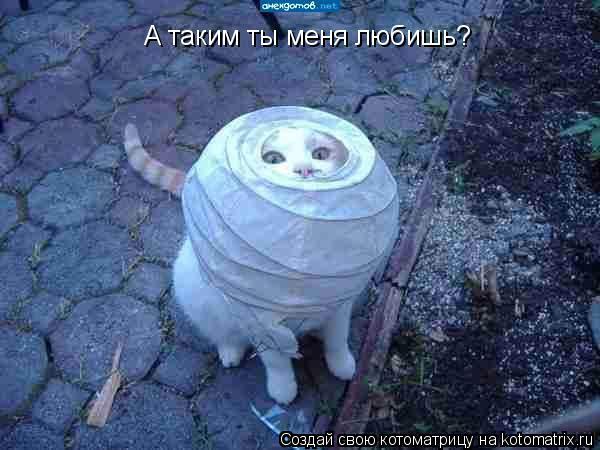 Котоматрица: А таким ты меня любишь?