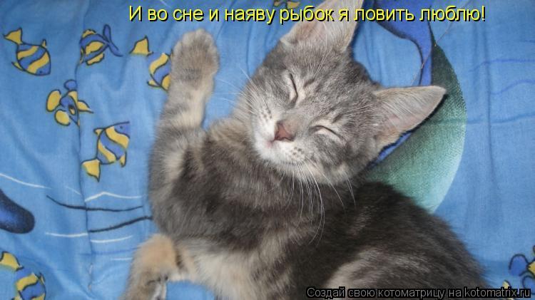 Котоматрица: И во сне и наяву рыбок я ловить люблю!