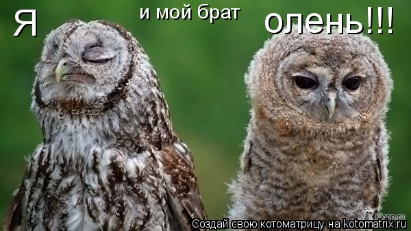 Котоматрица: Я  и мой брат олень!!!
