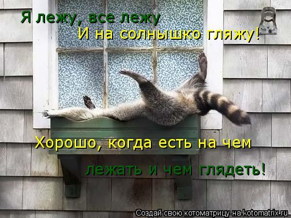 Котоматрица: Я лежу, все лежу И на солнышко гляжу! Хорошо, когда есть на чем  лежать и чем глядеть!
