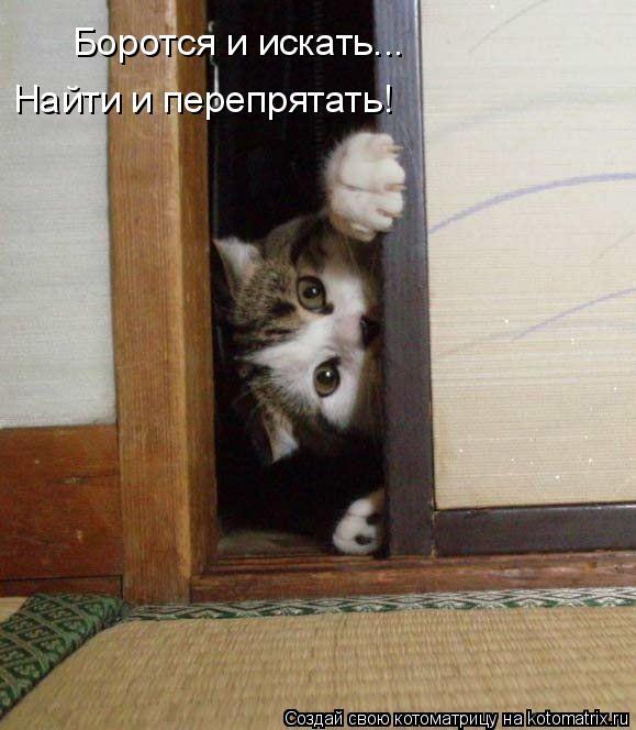 Котоматрица: Боротся и искать... Найти и перепрятать!