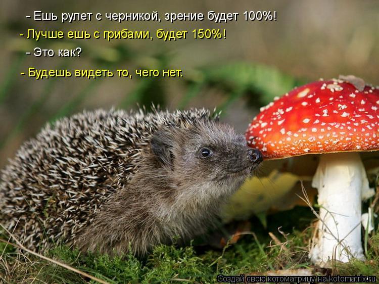 Котоматрица: - Ешь рулет с черникой, зрение будет 100%! - Лучше ешь с грибами, будет 150%! - Это как? - Будешь видеть то, чего нет.