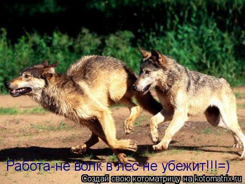 Котоматрица: Работа-не волк в лес не убежит!!!=)
