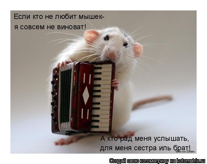 Котоматрица: Если кто не любит мышек- я совсем не виноват! А кто рад меня услышать, для меня сестра иль брат!