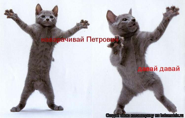 Котоматрица: наварачивай Петрович давай давай