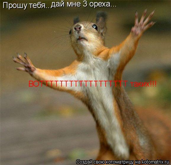 Котоматрица: Прошу тебя... дай мне 3 ореха... ВОТТТТТТТТТТТТТТТТТТ таких!!!
