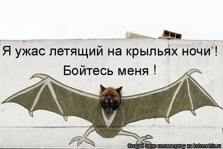 Котоматрица: ! Бойтесь меня Я ужас летящий на крыльях ночи !